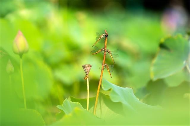 7966557_1499819432蜻蜓.jpg